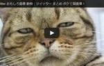 Twitter おもしろ画像 動物|ツイッター まとめ ボケて猫画像!